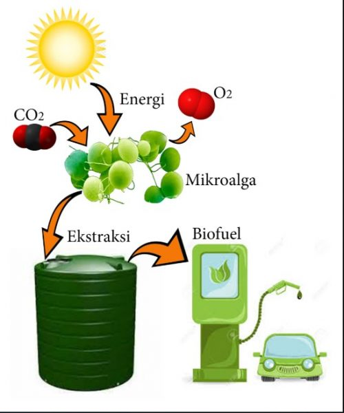 sumber energi alternatif biofuel